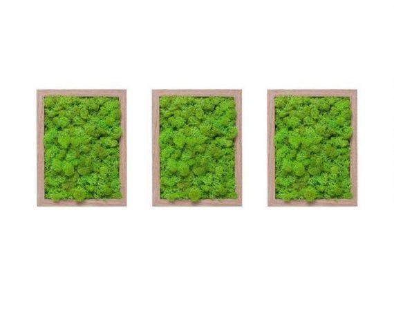 set-3-tablouri-licheni-decorativi-verde-lime-3x19x23-rama-lemn-tb446