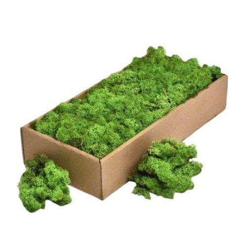 Cutie cu licheni verzi, 500 gr