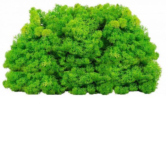 licheni-decorativi-conservati-0-5kg-verde-deschis-cal-1-101260-2