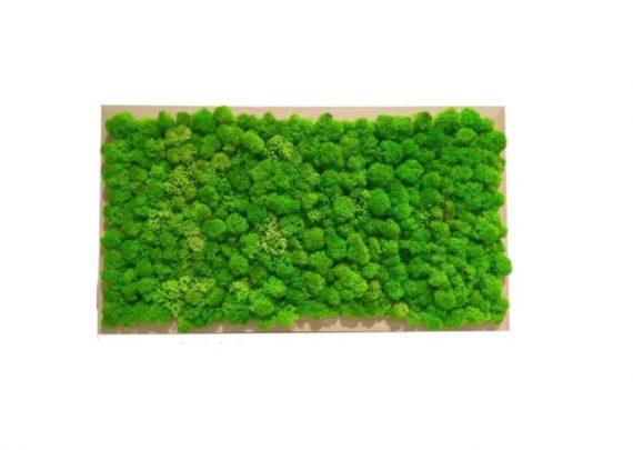 Tablou Licheni decorativi, 40 cm