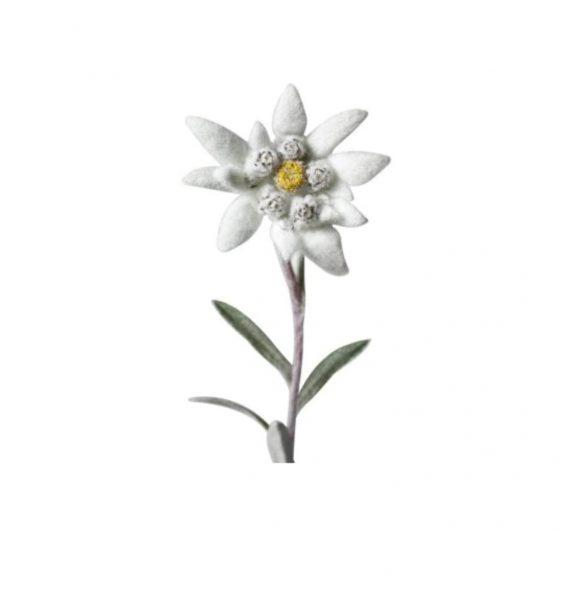 Flori de sapun si Floare de Colt naturala-1