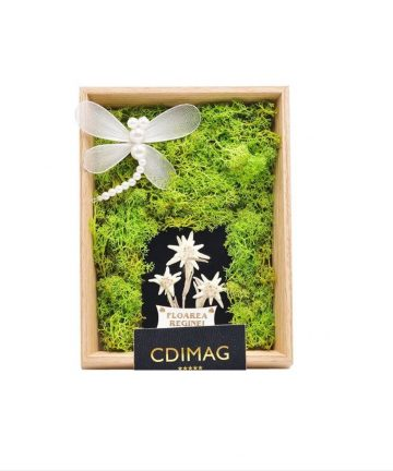 Rama foto decorata cu licheni stabilizati si Floare de Colt-1