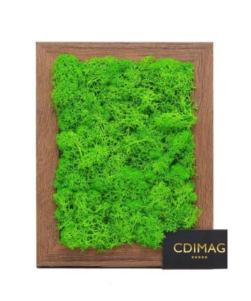 licheni decorativi verde deschis,