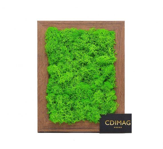 licheni decorativi verde deschis,