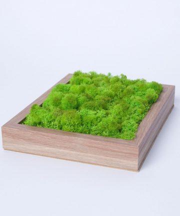 tablou licheni-002