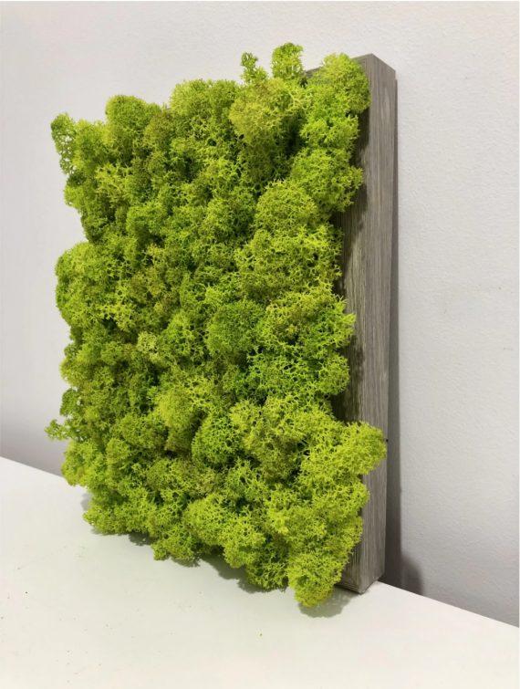 tablou licheni-003