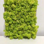 tablou licheni-004